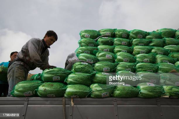 Workers load sacks of napa cabbages onto a truck in a field on Anbandeok Hill in Gangneung South Korea on Thursday Sept 5 2013 South Korea's second...