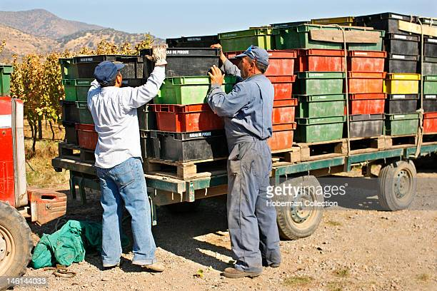 Workers Loading Crates of Grapes Chile