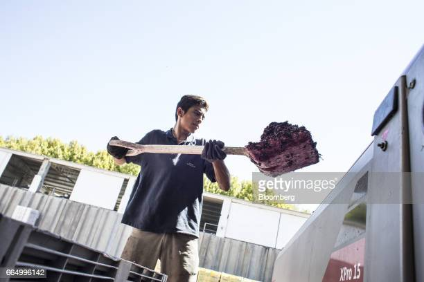 A workers loads crushed grapes into a press at the Bodega Santa Julia production facility in Mendoza Argentina on Tuesday March 23 2017 The Argentine...