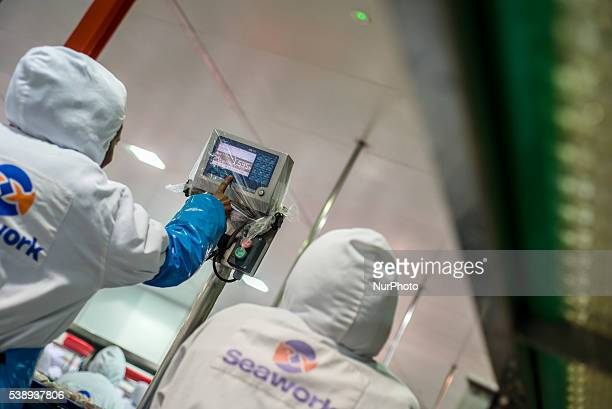 Workers of a fish processing factory weigh fish Walvis Bay Namibia June 7 2016 A main product of the factory is Hake making 22 000 tons of final...