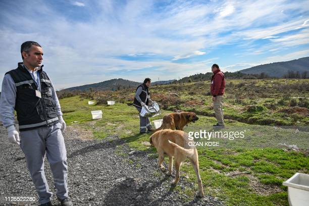 Workers of Istanbul Metropolitan Municipality feed stray dogs on January 30 2019 at Sariyer northern Istanbul In 2018608 animals were cared for by a...