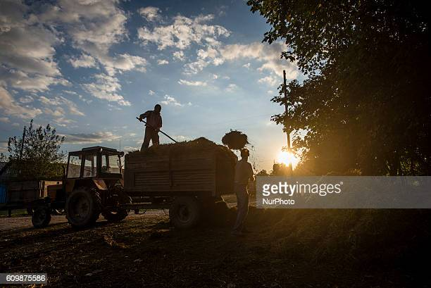 Workers of the Nikitin kolkhoz load hay for delivering to cowsheds Ivanovka village Azerbaijan Ivanovka is a village with mainly Russian population...