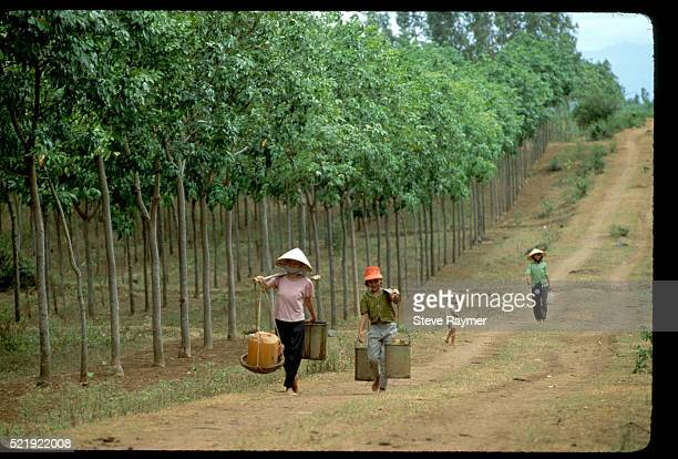 Workers on Rubber Plantation in Con Thien