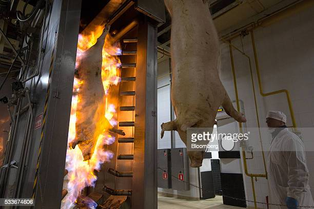 Workers operate pig burners at the slaughterhouse operated by AVK Exima ZAO in Galaktionovsky village near Orel Russia on Thursday May 19 2016...