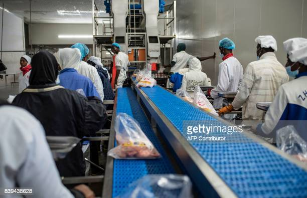 Workers package chicken pieces on an assembly line in the Valentine Chicken Abattoir on July 11 2017 Farming in Nigeria is not for the fainthearted...