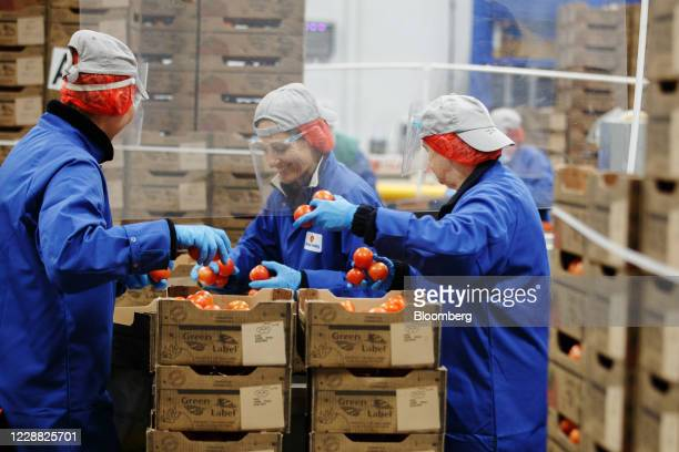 Workers package imported tomatoes from Spain at the Fruit Terminal at the Port of Southampton, operated by Associated British Ports Holdings Ltd., in...