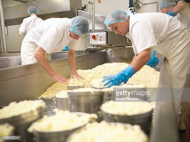 Workers packing moulds for round cheeses in cheese-making factory