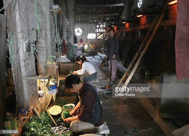Workers pick glass fragments used to produce fiberglass at a fiberglass factory March 16 2005 in Chengdu Sichuan Province China Premier Wen Jiabao...