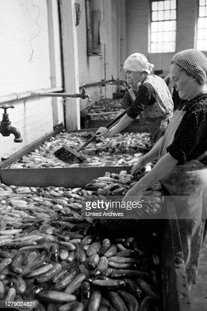Workers pickling cucumber for canning at the canning factory C. Th. Lampe in Brunswick, Germany 1939.