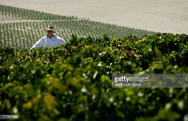 Workers picks grapes at a vineyard in Jerez to make sherry a fortified wine 31 August 2006 Sherry is a type of wine originally produced in the region...