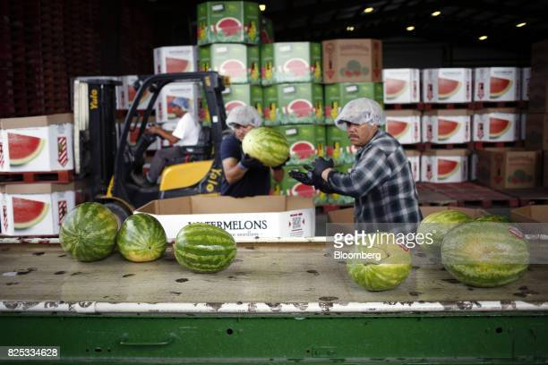 Workers place harvested watermelons on a conveyor belt in a packing facility at Frey Farms in Poseyville Indiana US on Tuesday Aug 1 2017 Increases...