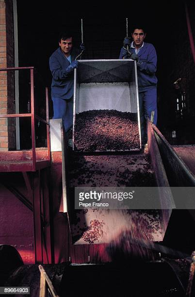 Workers place the grape to some deposits Workers place the grape to some deposits in the factory of VegaSicilia Company in the Valladolid province