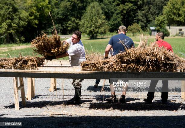 Workers place treated hemp stalks on an drying rack outside in the sun before being made into wood flooring at HempWood in Murray Ky on Thursday Sept...