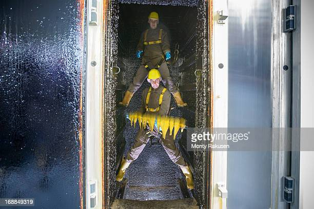 workers placing haddock fillets inside smoke house in food factory - legs spread open stock photos and pictures