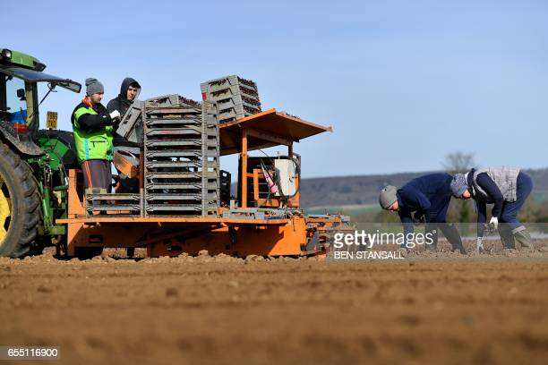 Workers plant salad crops in a field in Wrotham south east England on March 13 2017 Resentment about the scale of immigration helped determine the...