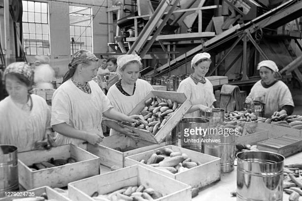 Workers prepare cucumber for canning at the canning factory C. Th. Lampe in Brunswick, Germany 1939.