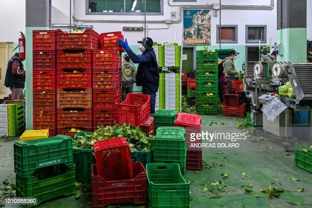 Workers prepare lemons for packaging during harvest at the 'Costieragrumi De Riso' traditional lemon growing company on April 24 2020 in Minori south...