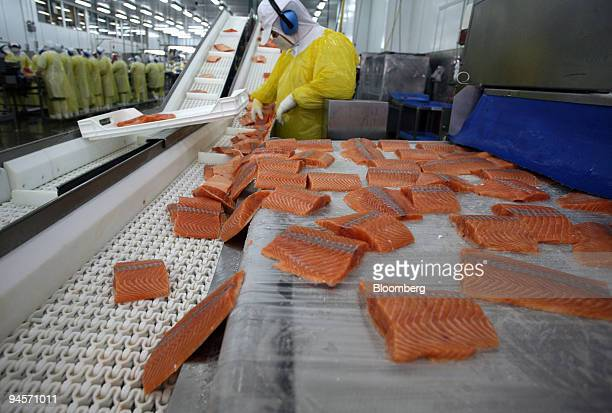 Workers prepare portions of salmon to be frozen in the factory of Marine Harvest company in the outskirts of Puerto Montt Southern ChileWith a...