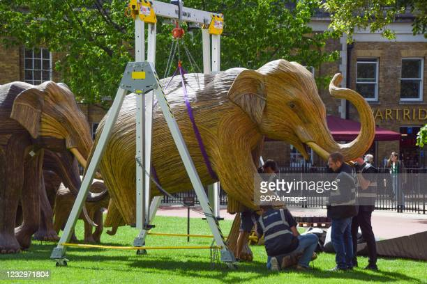Workers prepare the elephant sculptures at the Duke of York Square in Chelsea, London. Part of the CoExistence art installation, which aims to shed...