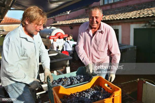 Workers process justharvested Nerello Mascalese grapes for rose wine at the Tenuta delle Terre Nere winery located on the northern slope of the Mt...