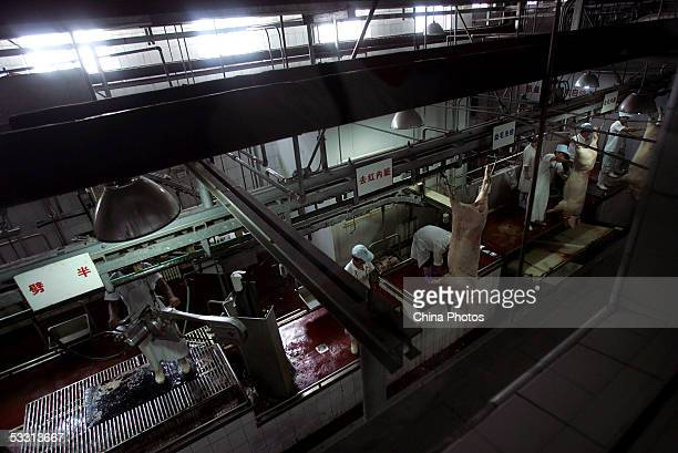 Workers process slaughtered pigs at a production line in a workshop of Beijing Resource Group on August 1, 2005 in Beijing, China. China has launched...
