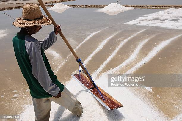 Workers push salt crystals into mounds as they harvest the solar salt from ponds filled with sea water on October 19 2013 in Madura Indonesia Salt...