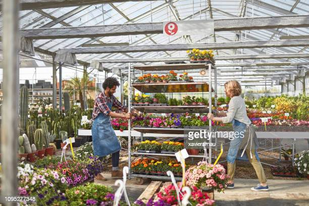 Plant Nursery Stock Pictures Royalty