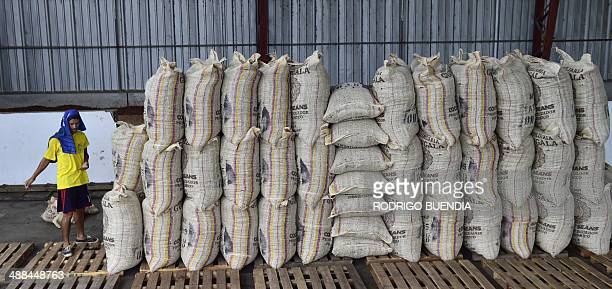 Workers put in bags cocoa beans for export at the Inmobiliaria Guangala exporting company in the outskirts of Guayaquil 260 km southwest of Quito on...