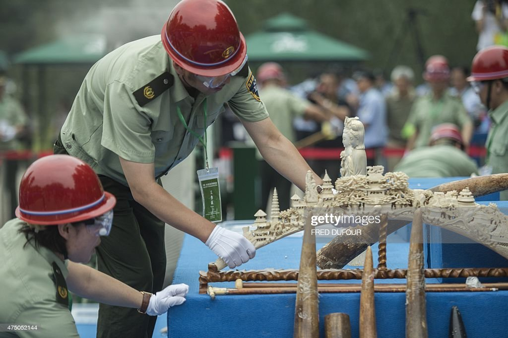Workers put ivory items on a sliding belt before being destroyed in Beijing on May 29, 2015. China destroyed more than six hundred kilograms of ivory in front of media and diplomats, as it seeks to shed its image as a global trading hub for illegal elephant tusks.