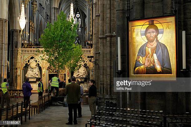 Workers put up an English Maple tree inside Westminster Abbey in preparation for the Royal Wedding on April 26 2011 in London United Kingdom Prince...