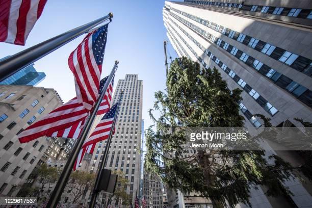 Workers raise the Rockefeller Center Christmas Tree in front of the Rockefeller Center on November 14, 2020 in New York City.
