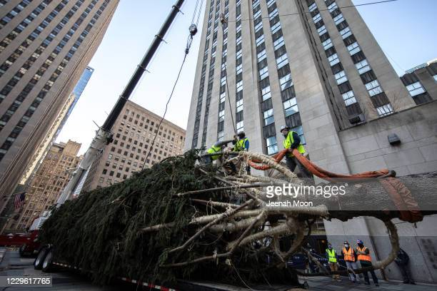 Workers raise the Rockefeller Center Christmas Tree on November 14, 2020 in New York City. The 75-foot-tall tree found at Daddy Al's General Store in...