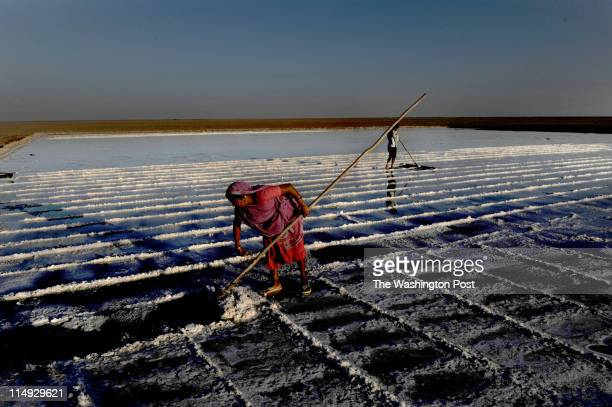 Workers rake salt crystals on a late afternoon in Little Rann of Kutch India