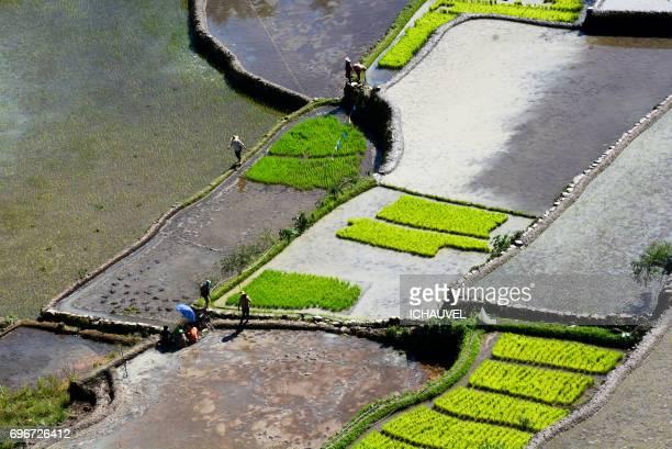workers rice terraces philippines - personne humaine stock-fotos und bilder