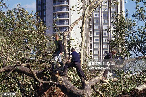 Workers sawing up fallen trees in England in the aftermath of the Great Storm of 1987 17th October 1987