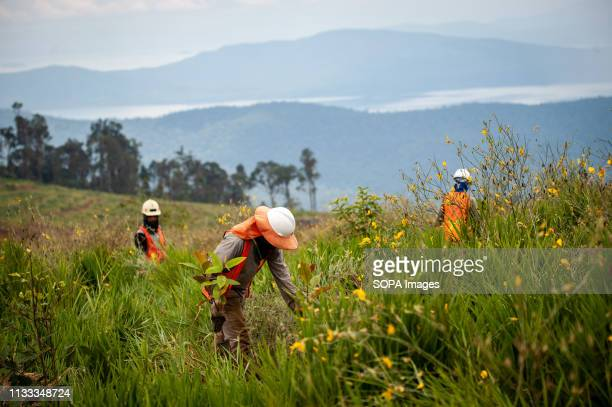 Workers seen doing rehabilitation work planting tree seedlings at a former nickel mining site Nickel mining by the PT Vale Indonesia a nickel plant...