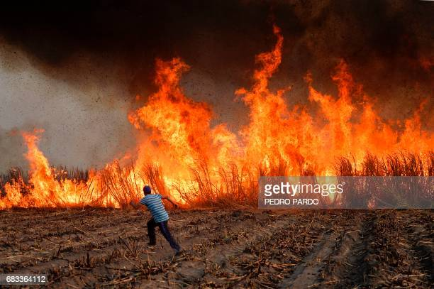 TOPSHOT Workers set fire to a sugar cane field to burn away the leafy parts a technique used before the cane is cut and harvested in Atencingo Puebla...