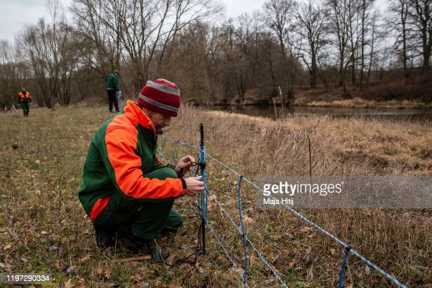 Workers set up a temporary fence near the Neisse River along the border to Poland in Brandenburg state on January 3 2020 near Zelz Germany The fence...