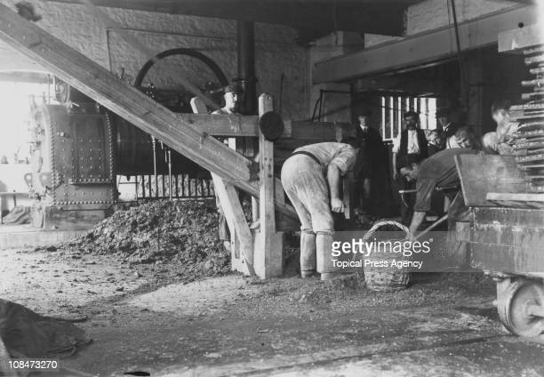 Workers shovelling sag into a basket at Henley and Sons cider works at Newton Abbot in Devon 1908