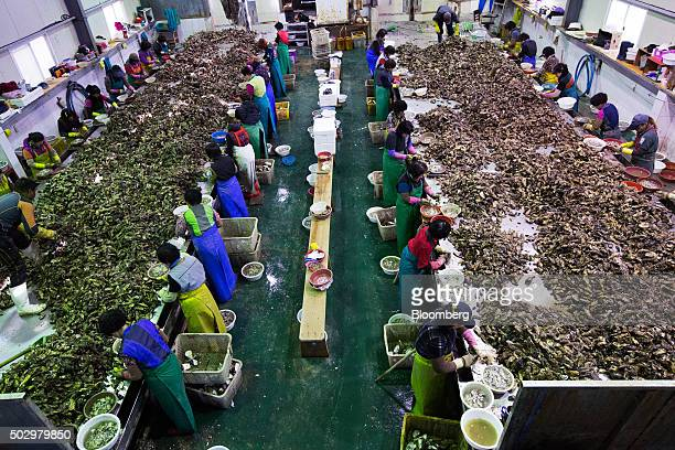 Workers shuck oysters at the Namyeong Fisheries factory in Tongyeong South Korea on Monday Dec 28 2015 South Korea's biggest brokerage predicts the...