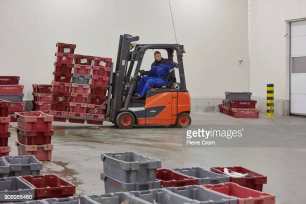 Workers sort fish in the port of Scheveningen on January 19 2018 in The Hague Netherlands A large majority of members of the European Parliament has...