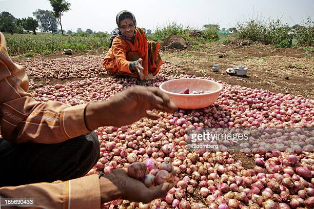 Workers sort harvested onions on a farm near Chandwad Maharashtra India on Wednesday Oct 23 2013 Onion prices in India may extend a record rally as...