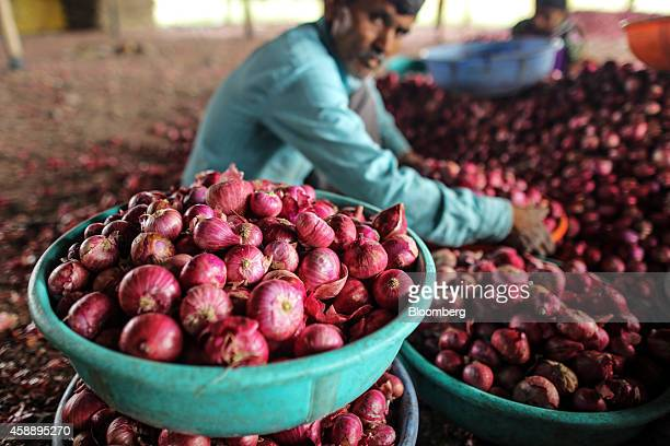 Workers sort onions inside SKT Trading Co's onion storehouse at the Agriculture Produce Market Committee wholesale market in Umrana Maharashtra India...