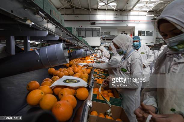 Workers sort oranges at the MAFA farms pack house on January 31, 2021 in Cairo, Egypt. For the second year in a row Egypt has remained at the top of...