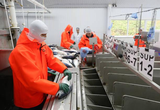RUS: Salmon Farming At Russian Aquaculture PJSC