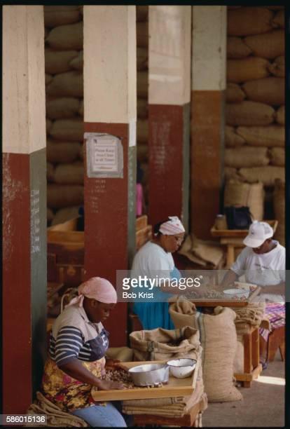 Workers Sorting Nutmeg Seeds
