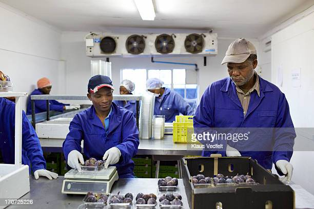 Workers sorting out figs at small fruit factory