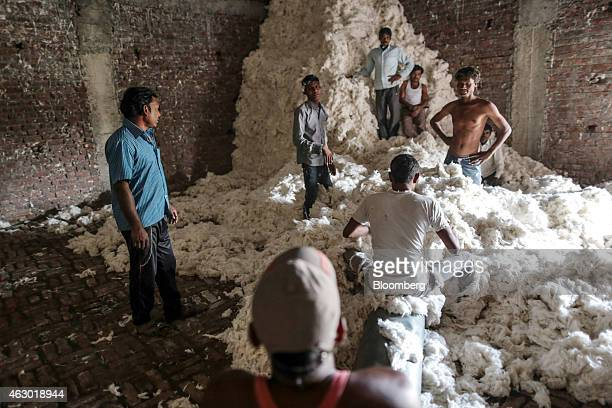 Workers stand and sit among a pile of cotton at a factory in Yavatmal Maharashtra India on Wednesday Feb 4 2015 In a country where as many as one in...