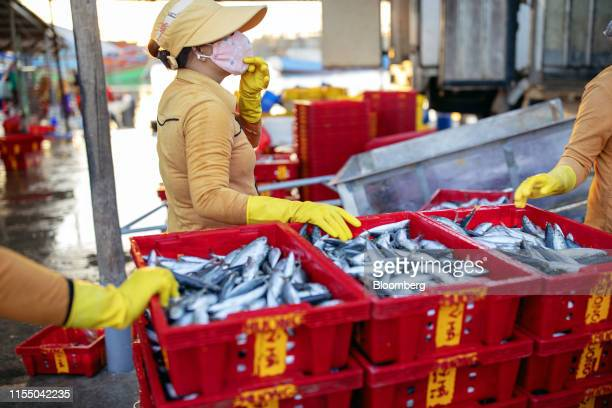 Workers stand next to crates of fish on a pier at Tan Quang harbor in Quang Nam province Vietnam on Wednesday June 26 2019 Fishermen are on the front...