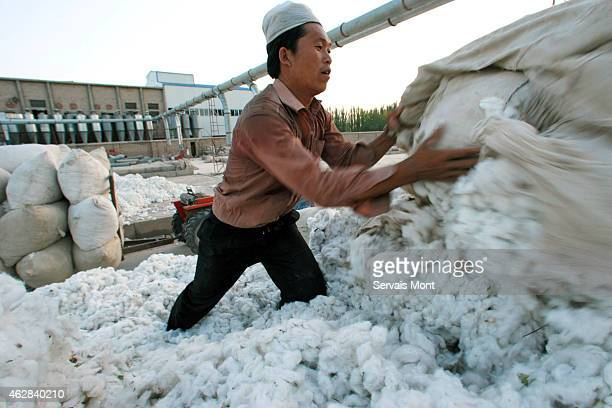 Workers stock a harvest of cotton in a cotton factory on October 10 2006 near Korla Xinjiang province China